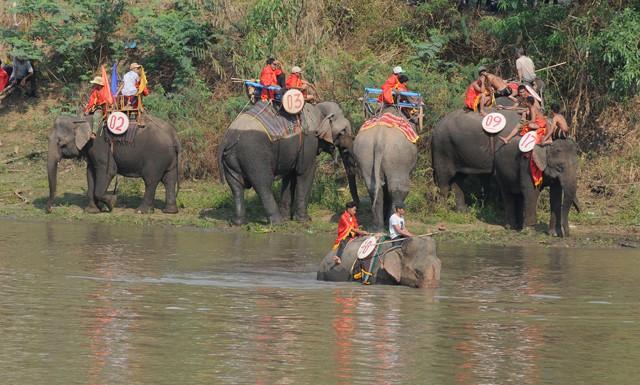 Hấp dẫn cuộc thi bơi dành cho voi trên dòng sông Sêrêpốc ảnh 1