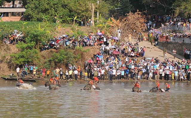 Hấp dẫn cuộc thi bơi dành cho voi trên dòng sông Sêrêpốc ảnh 3