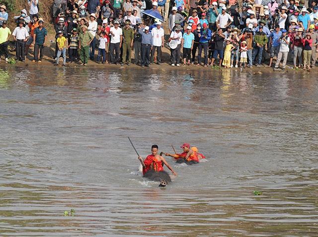 Hấp dẫn cuộc thi bơi dành cho voi trên dòng sông Sêrêpốc ảnh 4