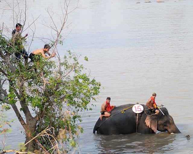 Hấp dẫn cuộc thi bơi dành cho voi trên dòng sông Sêrêpốc ảnh 5