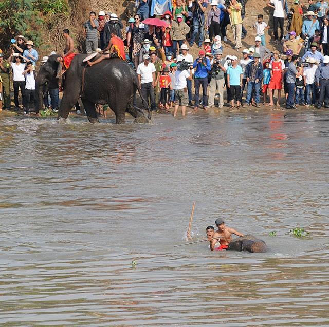 Hấp dẫn cuộc thi bơi dành cho voi trên dòng sông Sêrêpốc ảnh 6
