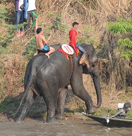 Hấp dẫn cuộc thi bơi dành cho voi trên dòng sông Sêrêpốc ảnh 8