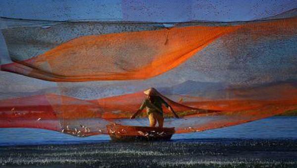 """Bức ảnh """"Rớ sớm"""" của Lê Minh Quốc"""