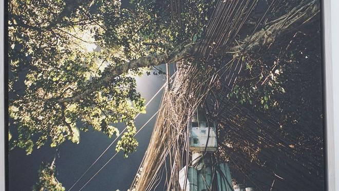 Tác phẩm nhiếp ảnh chụp cây và côt điện của họa sỹ Nguyễn Thế Sơn