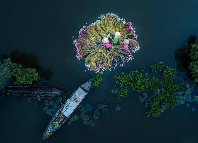 Bức ảnh Flowers on the water của tác giả Khánh Phan đã giành giải nhất hạng mục ảnh Vui tươi.