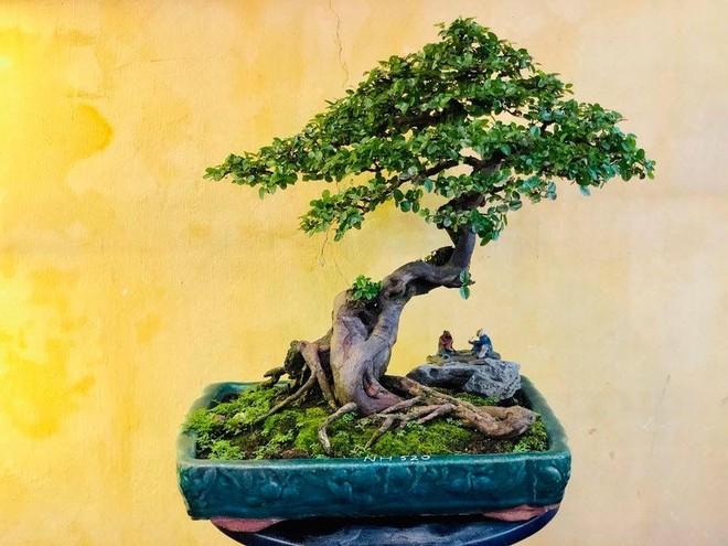 Trưng bày nghệ thuật Bonsai Phố cổ