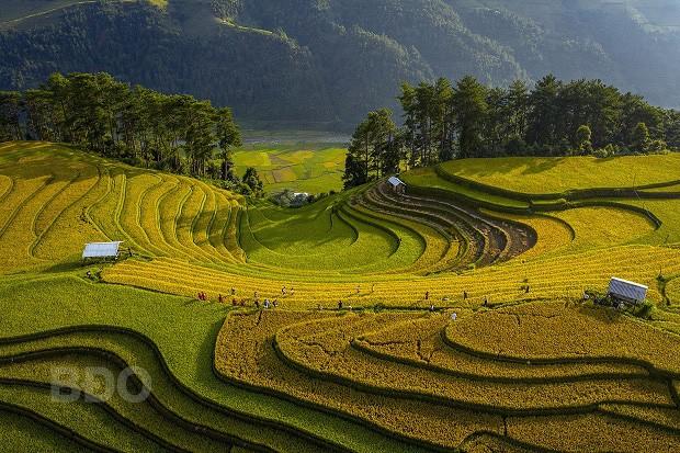 """Tác phẩm """"Golden Season In San Nhu"""" của NSNA Nguyễn Xuân Tuyến."""