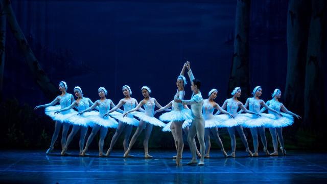 """Hoãn chương trình lưu diễn vở ballet """"Hồ thiên nga"""""""