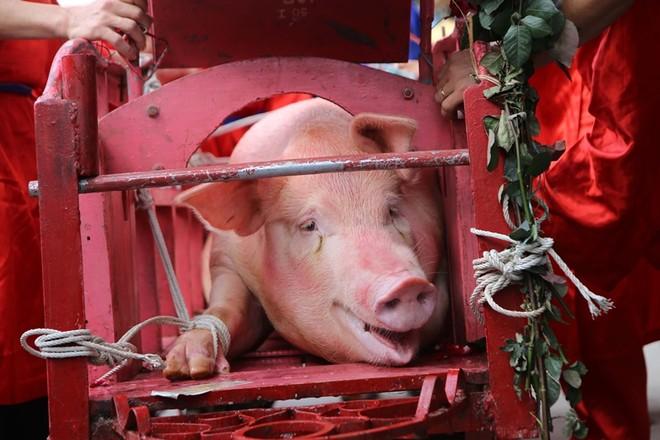Người dân hò reo khi xem chém lợn ở Ném Thượng ảnh 1
