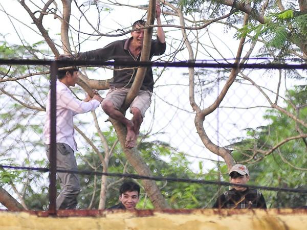 Người Nghệ An leo cây, trèo lên di tích lịch sử xem bóng đá ảnh 1