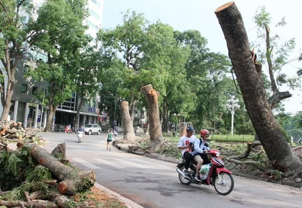 Đường phố Hà Nội một ngày sau giông lốc kinh hoàng ảnh 2