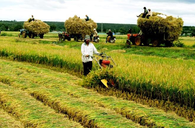 Chính thức kéo dài miễn thuế sử dụng đất nông nghiệp tới hết năm 2025