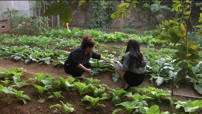 Mục sở thị vườn rau xanh an toàn của NSND Thanh Hoa 
