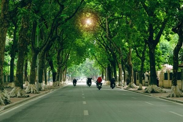 Hàng cây xanh là một trong những đặc trưng của Thủ đô Hà Nội