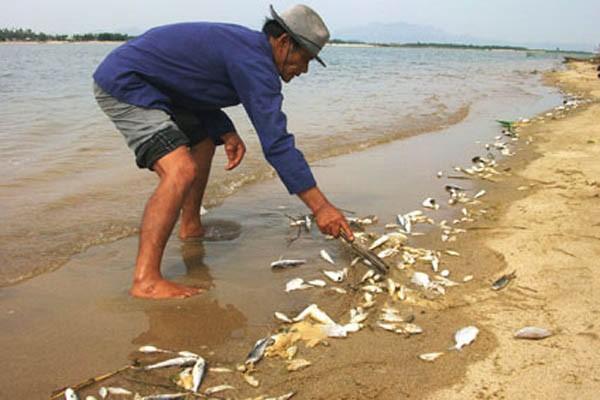 Người dân miền Trung thiệt hại nặng vì cá chết hàng loạt