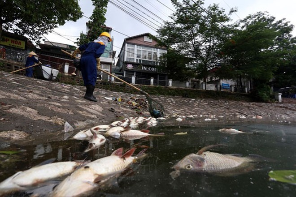 Cá chết nổi ở hồ Hoàng Cầu, quận Đống Đa, Hà Nội