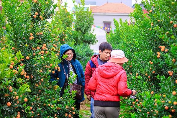 Những sắc hoa Tết ngập tràn phố phường Hà Nội ảnh 6