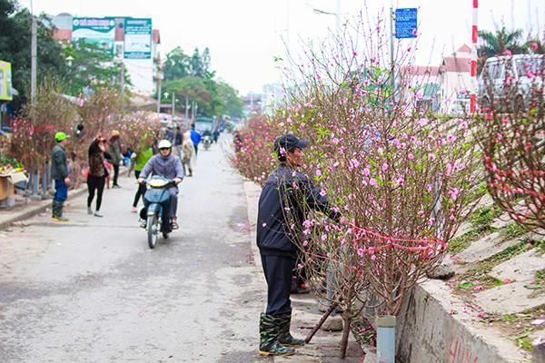Những sắc hoa Tết ngập tràn phố phường Hà Nội ảnh 1