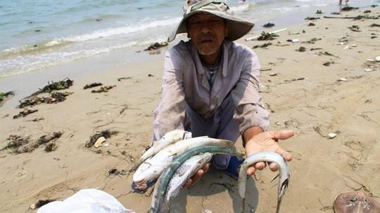 Sự cố môi trường do Formosa gây ra ảnh hưởng nặng nề tới 4 tỉnh miền Trung
