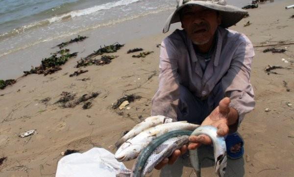 Hiện tượng cá chết hàng loạt ở biển miền Trung hồi tháng 4-2016 khiến ngư dân điêu đứng
