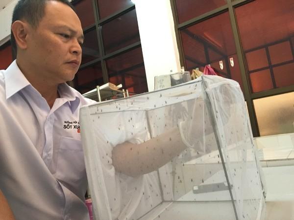 Loại muỗi vằn Wolbachia đã được nhân nuôi thành công, chuẩn bị được thả thí điểm tại một xã thuộc TP Nha Trang