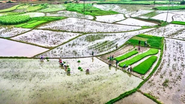 Khô hạn kéo dài có thể ảnh hưởng đến việc gieo cấy vụ Đông Xuân