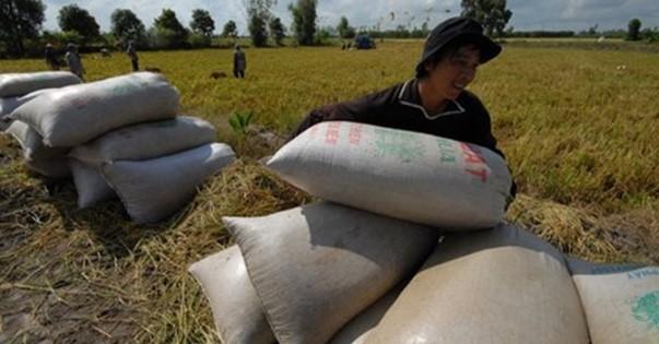 Hoạt động xuất khẩu gạo vẫn diễn ra bình thường theo kiến nghị của Bộ Công Thương