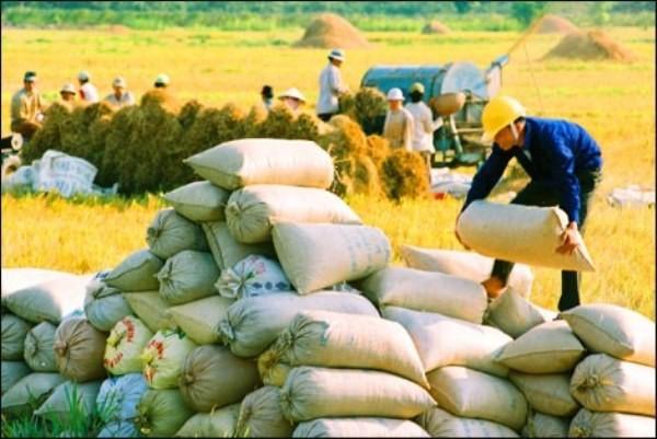 EU dành ưu đãi cho gạo xuất khẩu của Việt Nam