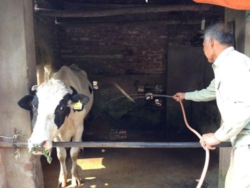 Giá thu mua sữa tươi ở Việt Nam đắt nhất thế giới? ảnh 1