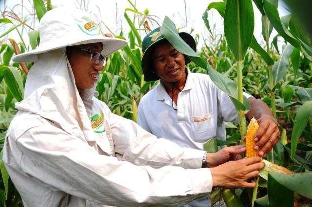 Cây trồng biến đổi gen được cho là vừa đảm bảo năng suất vừa giảm phát thải khí nhà kính