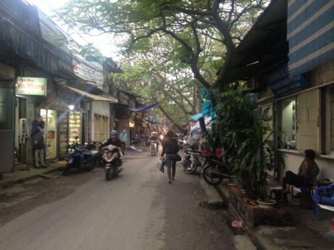Sẽ di chuyển, chặt hạ 42 cây xanh thuộc Công viên Thống Nhất để phục vụ dự án đường Nguyễn Đình Chiểu kéo dài