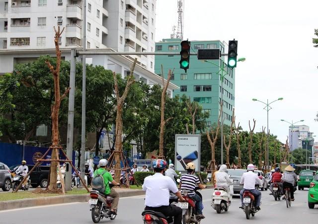Hàng Phượng Vĩ mới trồng trên phố Láng Hạ (Đống Đa, Hà Nội)