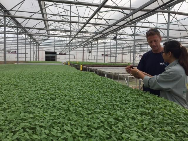 Tận mắt xem kỹ thuật trồng rau không cần đất ảnh 4