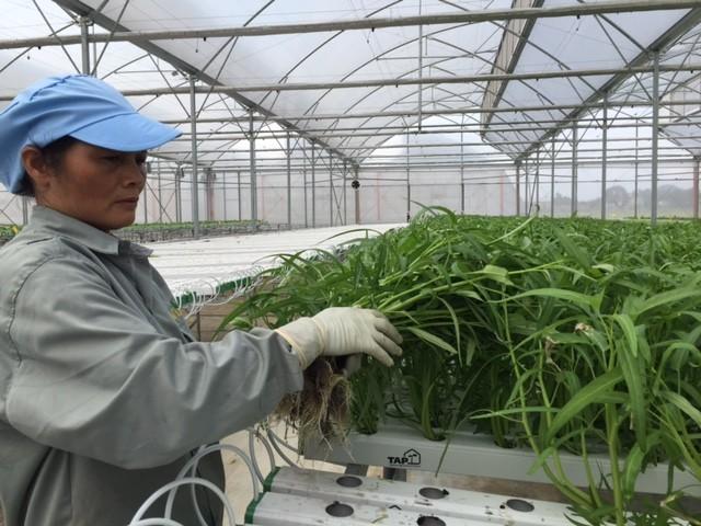 Tận mắt xem kỹ thuật trồng rau không cần đất ảnh 9