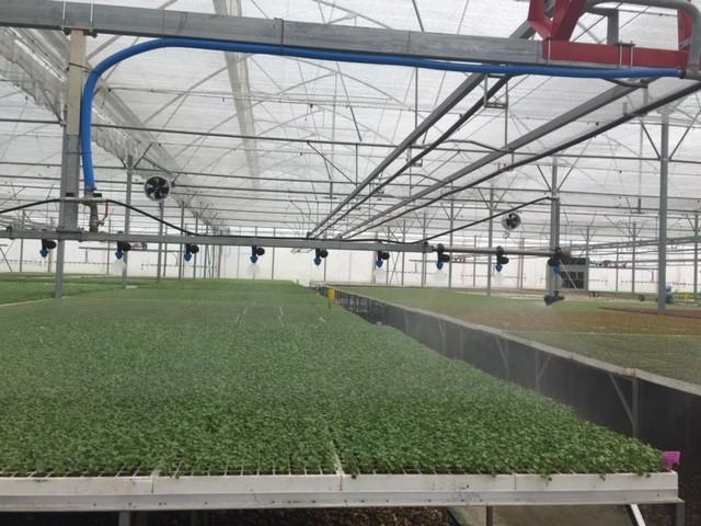Tận mắt xem kỹ thuật trồng rau không cần đất ảnh 3