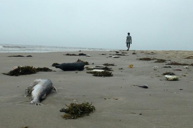 Sẽ lấy mẫu xét nghiệm gần 4.000 tấn hải sản tồn kho ở miền Trung, nếu an toàn sẽ cho lưu thông bình thường