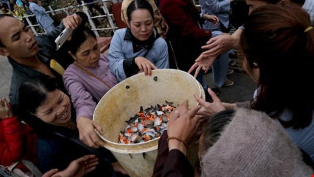 Việc phóng sinh cá chịm trắng nước ngọt không có gì đáng lo ngại