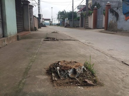 Đường liên thôn của xã Cẩm Yên trơ trọi sau chiến dịch chặt cây xanh dẹp vỉa hè của xã