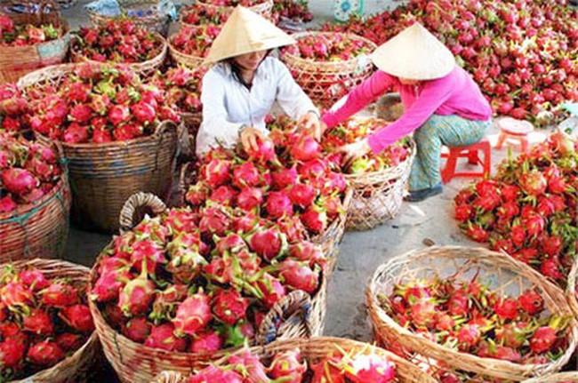 Mặt hàng rau quả là một trong những nhóm nông sản chịu tác động mạnh nhất do ảnh hưởng của dịch bệnh do virus Corona