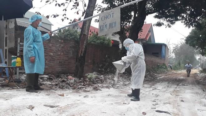 Đã có 5 địa phương xuất hiện cúm gia cầm, tiêu hủy hơn 43.000 con