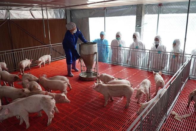 """Bộ trưởng Bộ NN&PTNT Nguyễn Xuân Cường kiểm tra tình hình chăn nuôi lợn """"hậu dịch tả châu Phi"""""""