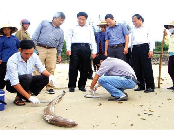Bộ Tài nguyên và Môi trường cảnh báo: Hiện tượng cá chết hàng loạt ở miền Trung có thể tái diễn ảnh 1