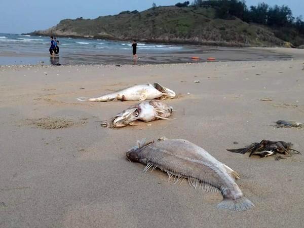 Sáng nay, công bố hiện trạng môi trường biển miền Trung ảnh 1