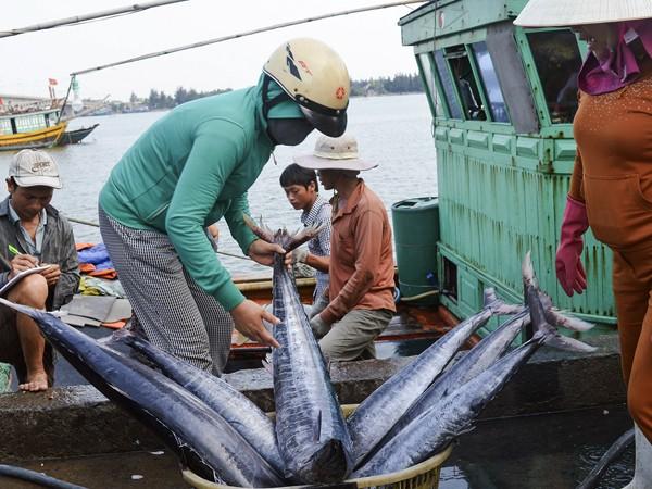Hỗ trợ khắc phục thiệt hại từ sự cố Formosa: Agribank chung tay vì ngư dân 4 tỉnh miền Trung ảnh 1