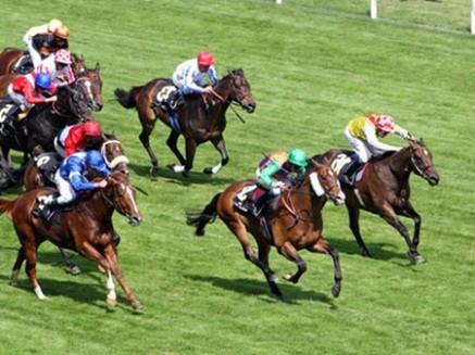 Từ 31-3, người dân sẽ được cá cược đua ngựa
