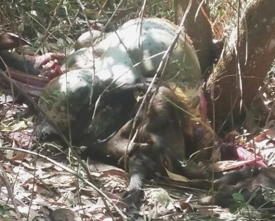 Con bò tót bị bắn chết trong khu bảo tồn thiên nhiên