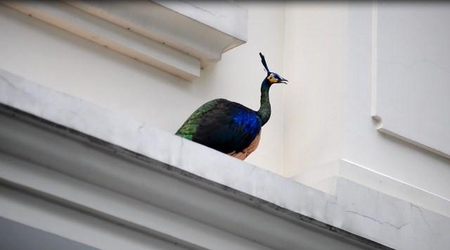 Con chim bay lên mái nhà dân