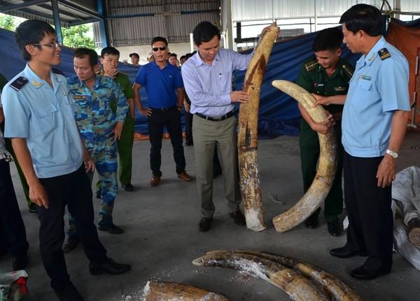 Lô ngà voi thu giữ trong ngày 1-12-2016 có giá thị trường khoảng 20 tỷ đồng