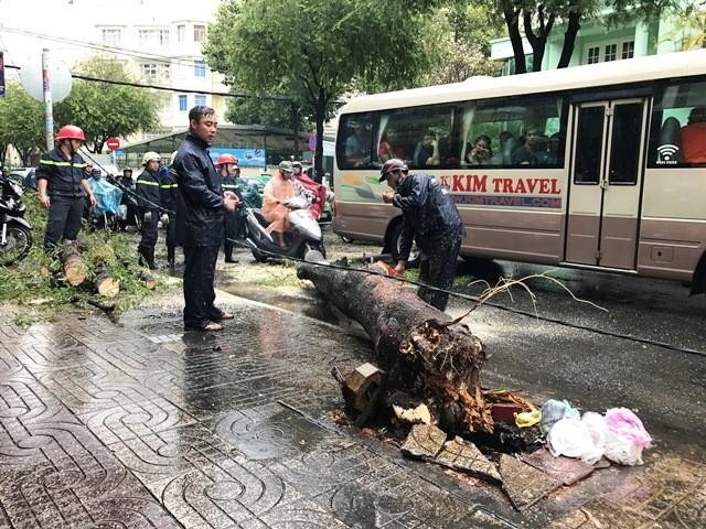 Cây xanh ngã ra đường, nhiều người thoát chết trong gang tấc