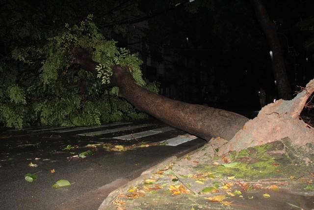 Ảnh hưởng bão số 14 gây mưa lớn làm hàng loạt cây bật gốc, nhà tốc mái
